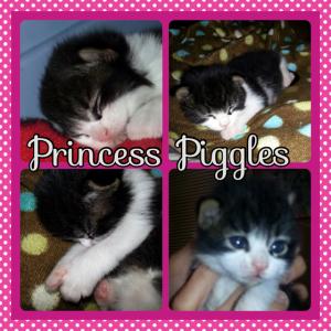 PrincessPiggles8:16:14
