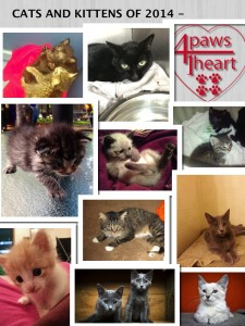CATS AND KITTENS SUMMER 2014