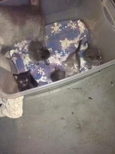dumpsterjoadd kittenfound in dumpsterwyandotte9:7:14