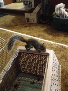 gina's squirrel9:14:14