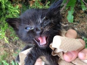michigan Cat rescue9:2:14