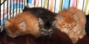 kittensneedinghelp11-8014