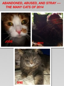 THE MANY CATS OF 2014 PART 3