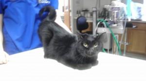 Michigan Cat Rescue12:28:14-seymour