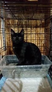 kitten12 2015