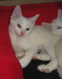 kitten13 2015