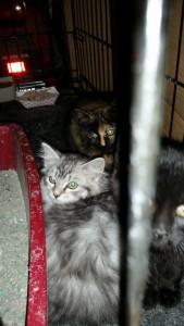 kitten42015