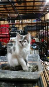 kitten5.2015jpg