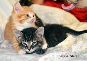 kittensw:detroitfirefighter::9:23:15