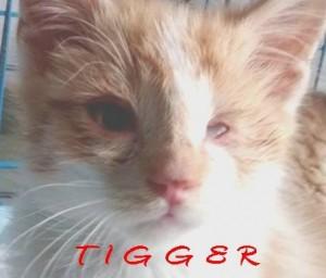 tigger12:3:15