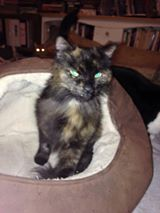 cats----2016