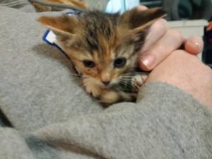 kittens w:debra 5:10:16