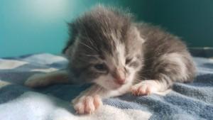 kittens 6:13:16---