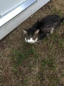 kitten - RIP Sweet Kittie8:26:16.