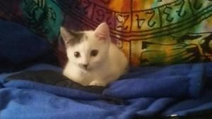 kitty-wjanpitts-112316