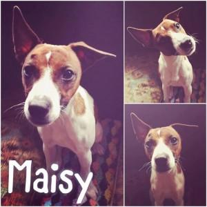 maisy-wcare-rescue-lisa-penszynski