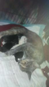Kittens - newborn w:rachelgerster 3:11:17