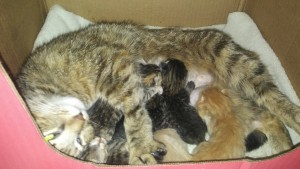 emma and her kittens 4:17:17