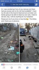 feral cats:detroit 4:417