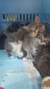 kittens w:charlotte y 6:12:17