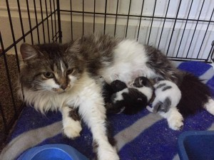 mama and kittens 5:31:17