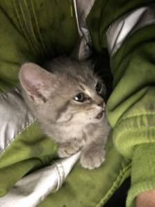 kitty -- 7:12:17