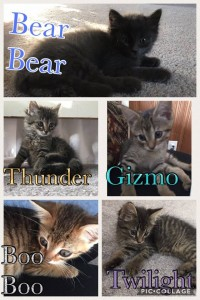 Bear Bear, thunder, Gizmo, Boo Boo, Twilight.11:2:17jpg