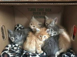 kittens w:roberta kretz 10:18:17