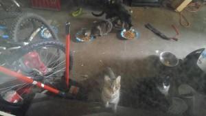 cats:kittens--2017
