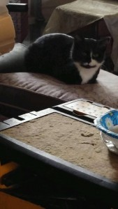 cats:kittens**2017