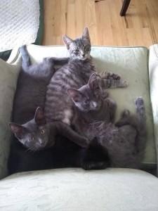 kittens+++11:23:17