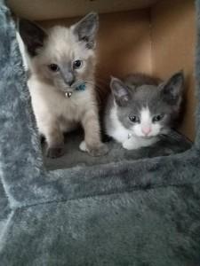 kittens 2017