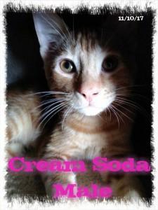 cream soda 1:8:18