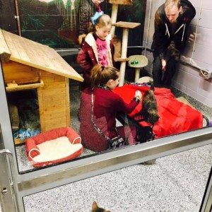 macomb county shelter kitten room