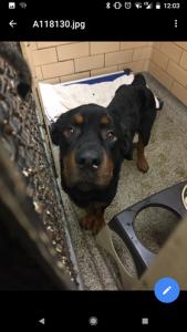 dakota w:DACC dog with 313
