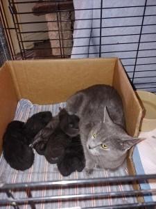 mama Kat w:kittens 5:16:18