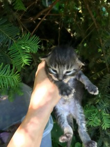 izzy kitten--7:17:18