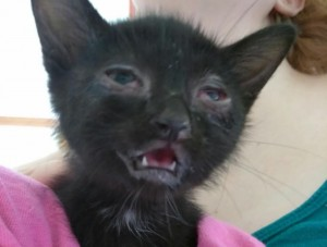 kitten spousal abused - 6:29:18 ==