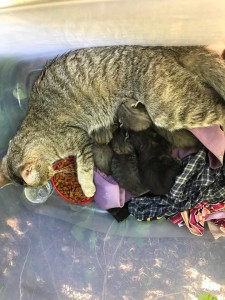 Izzy and babies 8:9:18