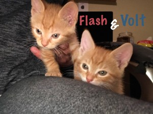 flash and volt 10:7:18