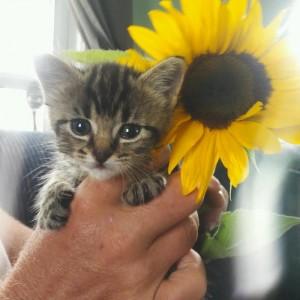sunflower w:rachel G. 9:13:18