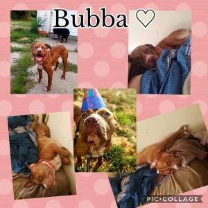 bubba==9:16:18