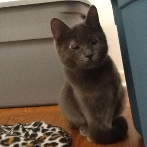 brooke w:saving cats & kittens in Michigan:debbie nelson