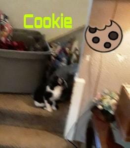 cookie 3:13:20