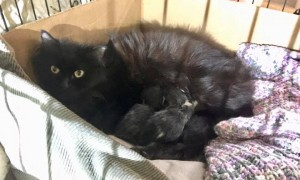 raven and babies 4:7:20