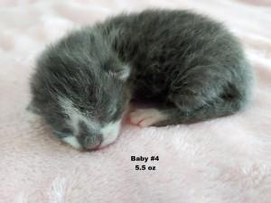 baby 4 - susie q 4:27:20