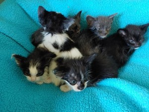 Kittens w:particia brown 5:14:20