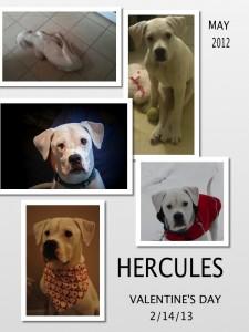 Hercules -2012 too 2013