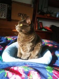 mama cat w:kathy --