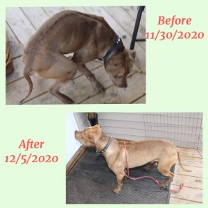 lucky before and after with Judy brood 12:6:20